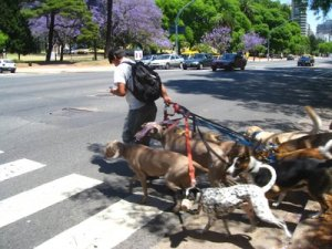 Dogwalkers in Buenos Aires